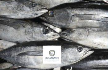 olasagasti conserve mar cantabrico